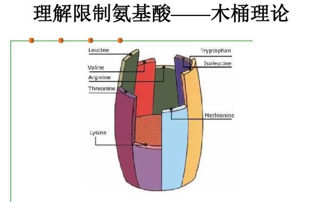 氨基酸吸收的木桶理论.png