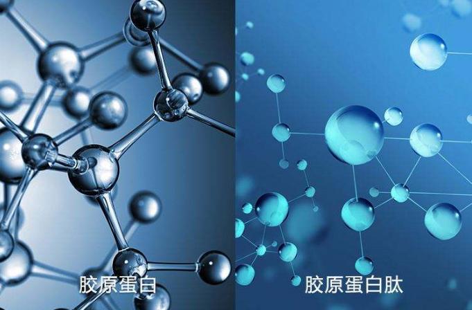 胶原蛋白肽与慢性疾病.png