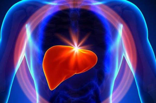胶原蛋白肽的护肝作用.png