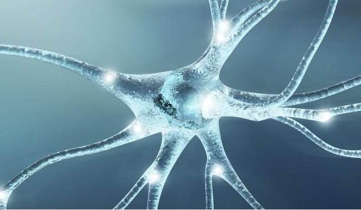 胶原蛋白肽与神经.png