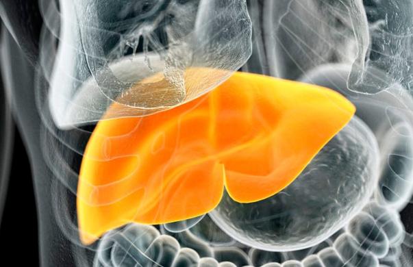 胶原蛋白肽与脂肪肝.png